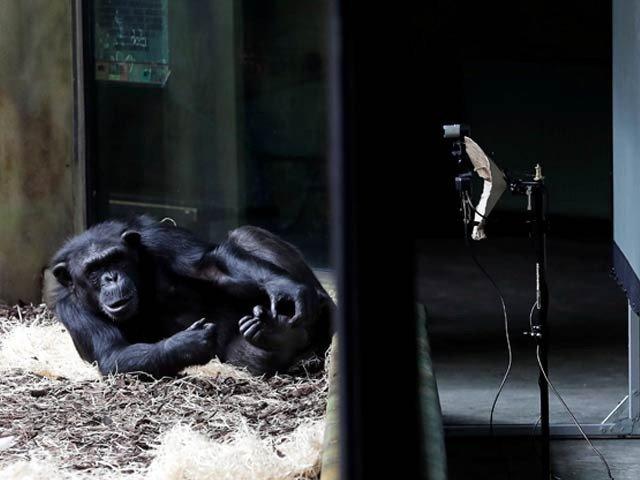 Monkeys also began to have online meetings