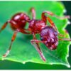 Ants know the science of making long, strong and long lasting tunnels!