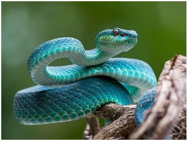 Inspired by snakes, bill-eating batteries are made